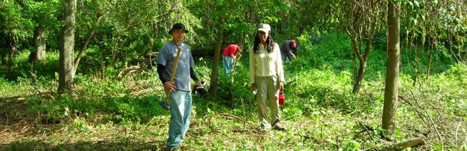 Students working in a wooded area
